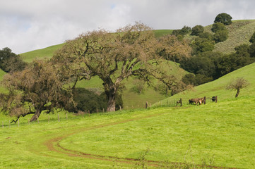 Poster Hill Grassy hill