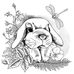 Small rabbit in flowers and plants with a dragonfly. Vector black and white illustration.