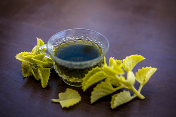 Green colored beneficial and ayurvedic and herbal tea of Carom leaves or bishop's weed or ajwain in a transparent cup with fresh leaves.