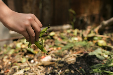 child's hands throwing out kitchen waste from a plate to the garden compost heap for recycling and fertilizer.