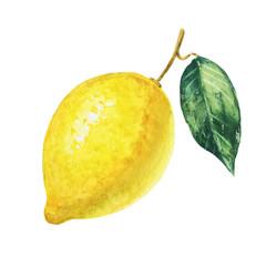 Yellow lemon on white background. Watercolor illustration.