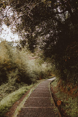 Paved walkway in green forest