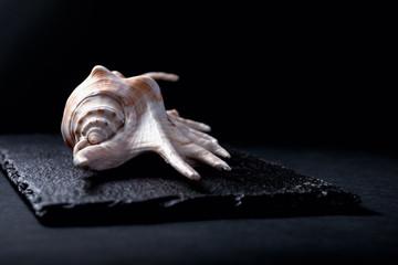seashell on stone surface isolated on black background