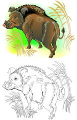 Colorful and black and white pattern for coloring. Illustration of wild boar. Worksheet for children and adults. Vector image.