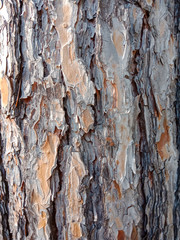 Bark of tree.