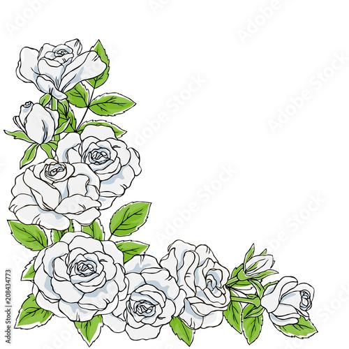 vector contour color white rose flower leaf bud set on white corner
