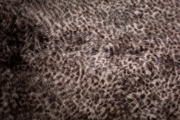 fur texture. leopard pattern.