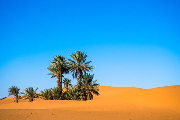Landscape with palm trees in a desert with sand dunes and blue sky