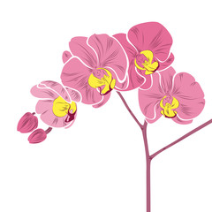 Nice pink orchid. Abstract flowers of orchids on a branch.