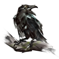 painted Raven bird sitting on a branch