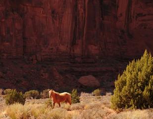Wall Mural - Wild horse Monument Valley Arizona Navajo Nation