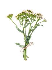 Bunch Achillea millefolium with white flowers