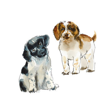 Sprinter spaniels. Portrait dog. Watercolor hand drawn illustration