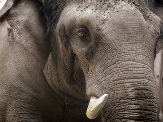 Portrait of an elephant in the park
