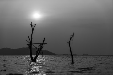 scenic of dead tree in reservoir with black and white filter