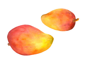 Mango fruit - watercolour painted picture