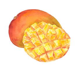 Mango fruit - cuted piece. Watercolor