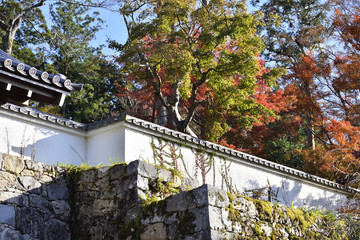 寺院の井芦垣と白壁
