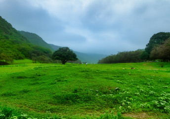 Oman Salalah green Nature