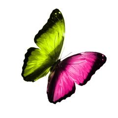 Бабочка с разными крыльями зеленого и розового цвета изолировано на белом фоне