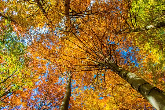 Colorful Autumn Forest, Europe, Slovakia, Sulov