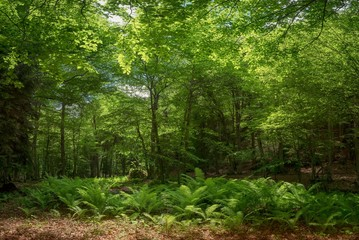 Fern in the forest against the backdrop of the green trees of the mountain forest