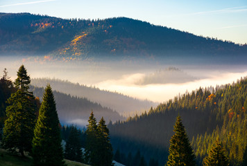 gorgeous foggy sunrise in mountains. beautiful autumn scenery of Apuseni Natural Park in Romania