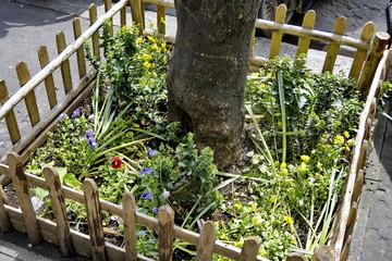 Pied d'arbre végétalisé en milieu urbain