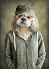 Foto op Canvas Hipster Dieren Cute dog shih tzu portrait, wearing human clothes, on vintage background. Hipster dog.