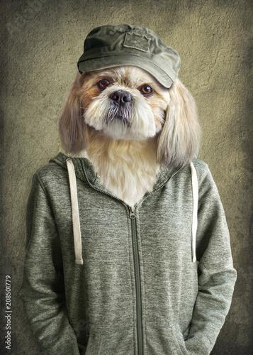 44fbc6c8e0 Cute dog shih tzu portrait