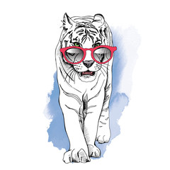 Poster with image of a white tiger in a red glasses on a blue background. Vector illustration.