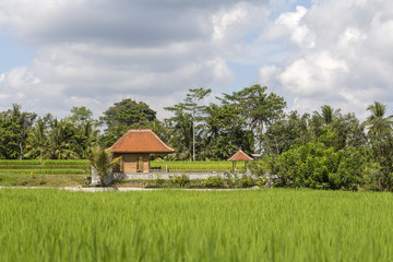 Tropical house with a tiled roof among rice fields. Bali, Ubud, Indonesia