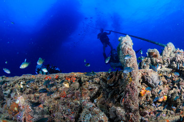 Colorful tropical fish swarm around the remains of an underwater shipwreck