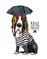 Vector illustration with Great Dane Dog in a striped cardigan, captain hat, bandana and with a dreadlocks. Real pirate - lettering quote. Poster, hand drawn style t-shirt print.