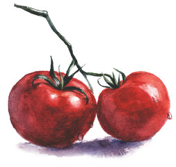 Watercolor food vegetables tomatoes illustration - red tomatoes on the branch