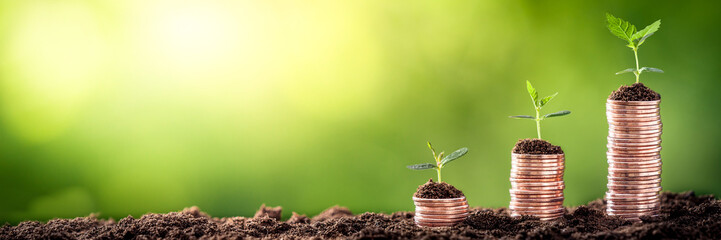 Growing Money - Plant On Coins - Finance And Investment Concept