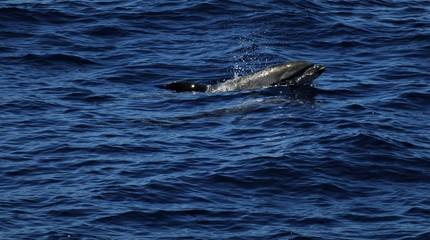 a lonley dolphin