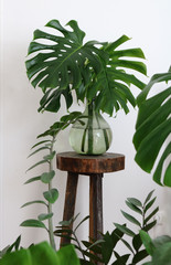 Green transparent glass vase with monstera leaves
