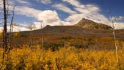 Wall Mural - Fall Season Peaks and Plants on the East Side of Glacier National Park Montana