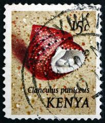 Postage stamp Kenya 1971 Strawberry Top Shell, Sea Snail