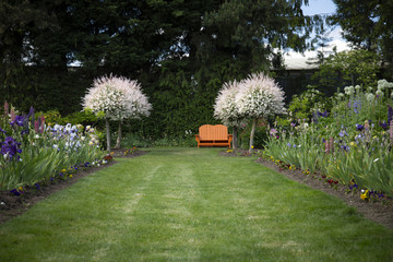 View of English Style Garden Path of Grass Lined, Mixed Flower Beds, Blooming Salix Integra Trees, and Orange Garden Bench, Daytime, Oregon