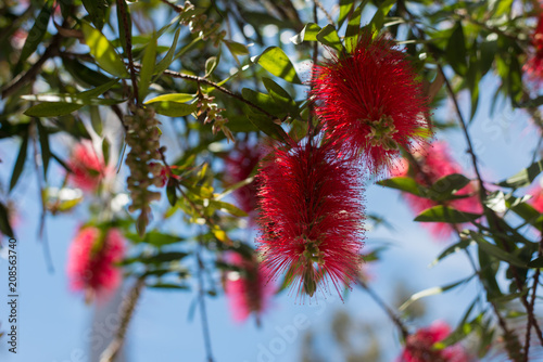 Pink Spiky Flowers Stock Photo And Royalty Free Images On Fotolia