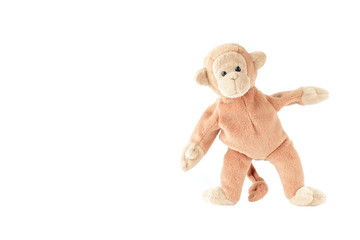 little brown monkey with white background