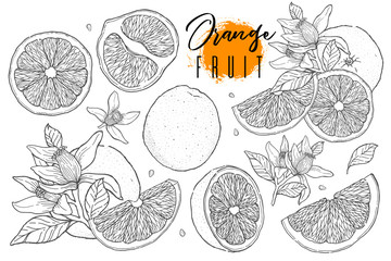 Ink hand drawn set of orange fruit. Food element collection. Vintage sketch. Black outline. Drawings of whole, half and sliced ripe oranges, juice, segment.