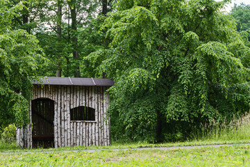 a small house of birch wood in the middle of the trees