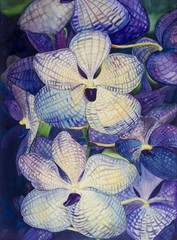 Orchid flowers purple,blue color of painting watercolor