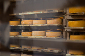 hard, pressed, cheese, manufacture, ageing, food, industry, yellow,