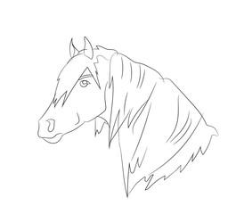horse portrait, lines, vector