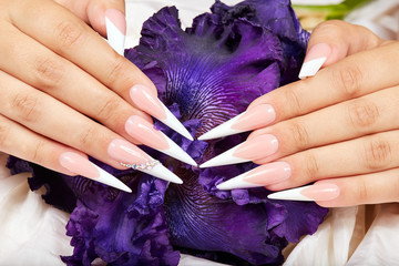 Hands with long artificial french manicured nails and a purple Iris flower