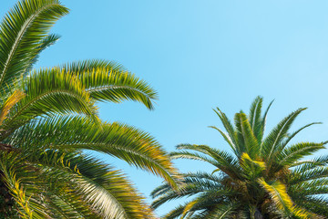 Tropical palm trees, in summer against the sky, toning